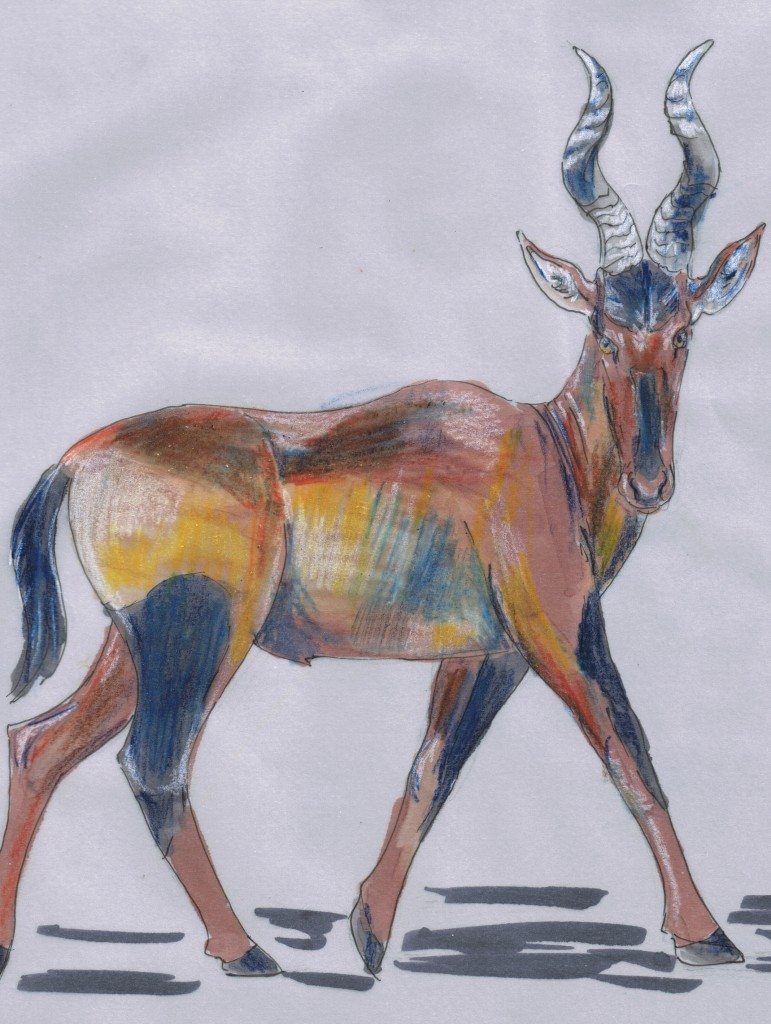 Alcelaphus buselaphus