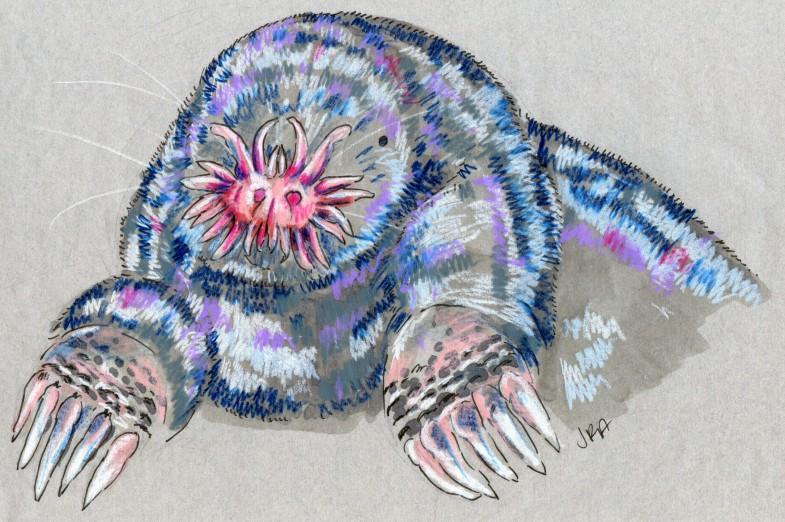 Condylura cristata
