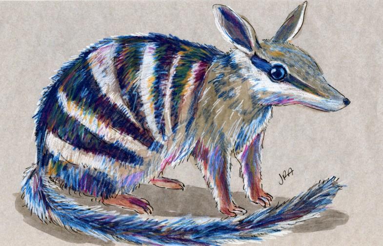Myrmecobius fasciatus