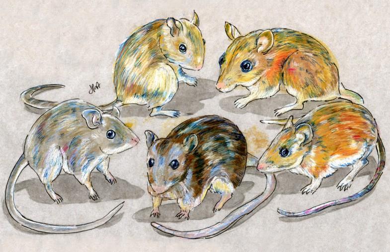 Five deer mice