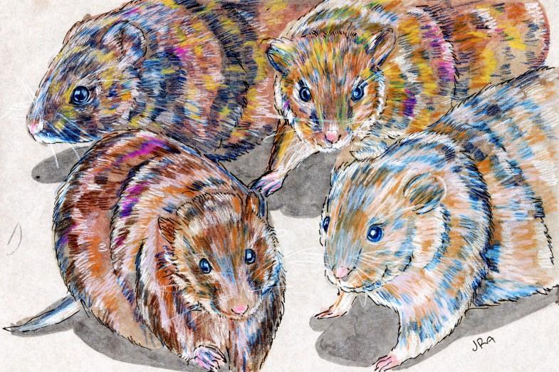 Four voles