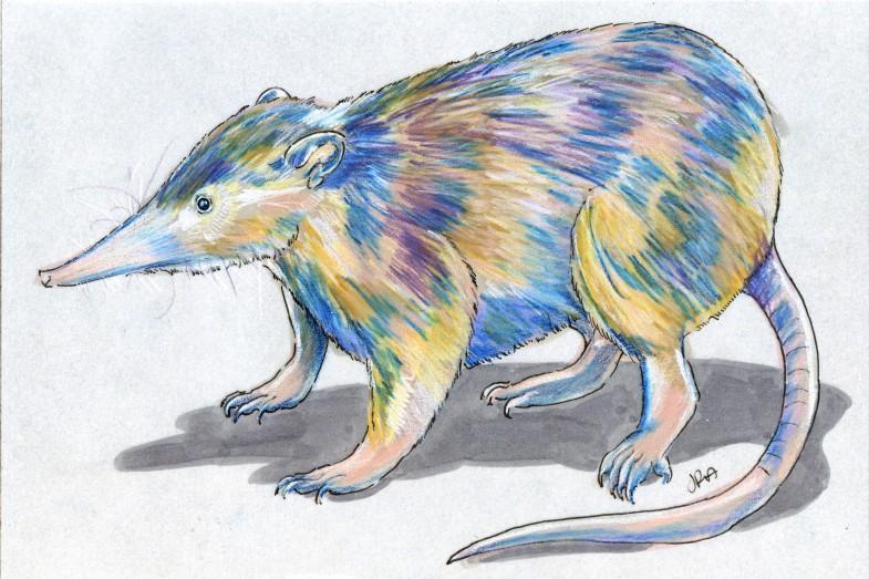 Solenodon paradoxus
