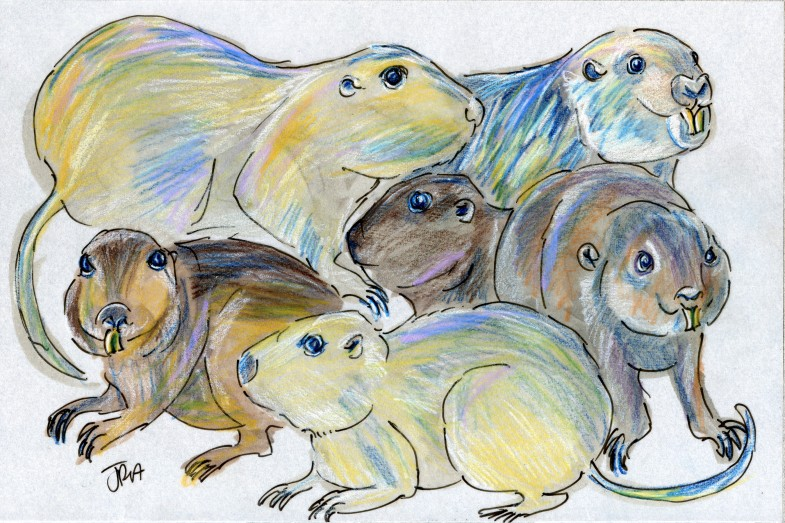 Six species from the genus Ctenomys