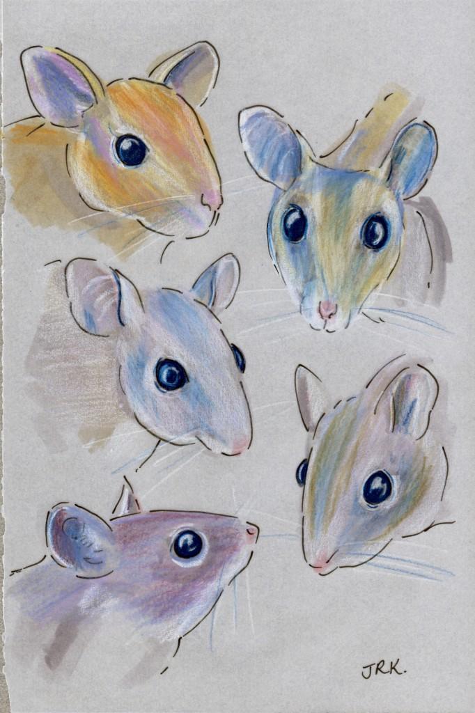 Five spiny mice