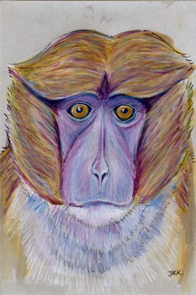 Allenopithecus nigroviridis