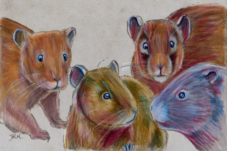 Four Swiss voles