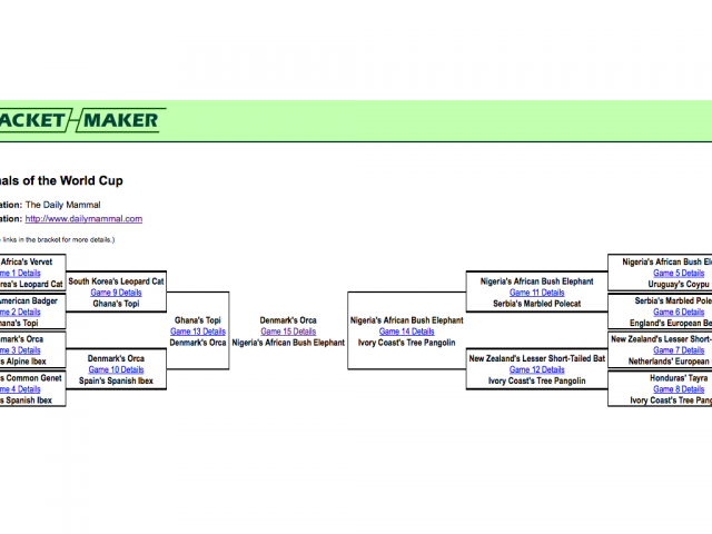 World Cup: The Mammalian Tournament Bracket