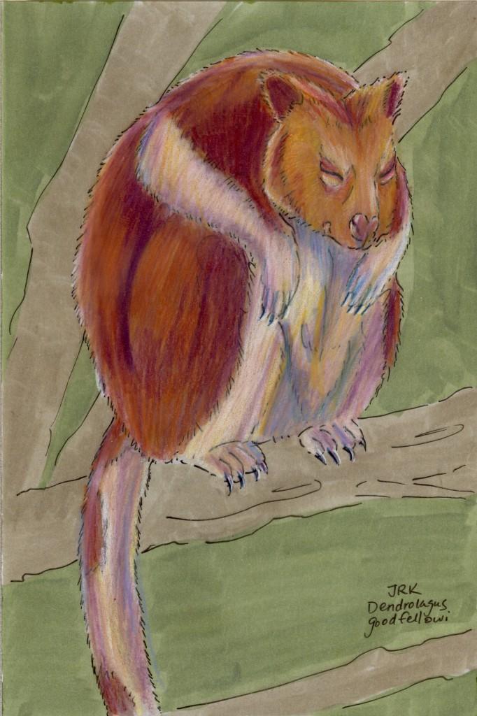 Dendrolagus goodfellowi