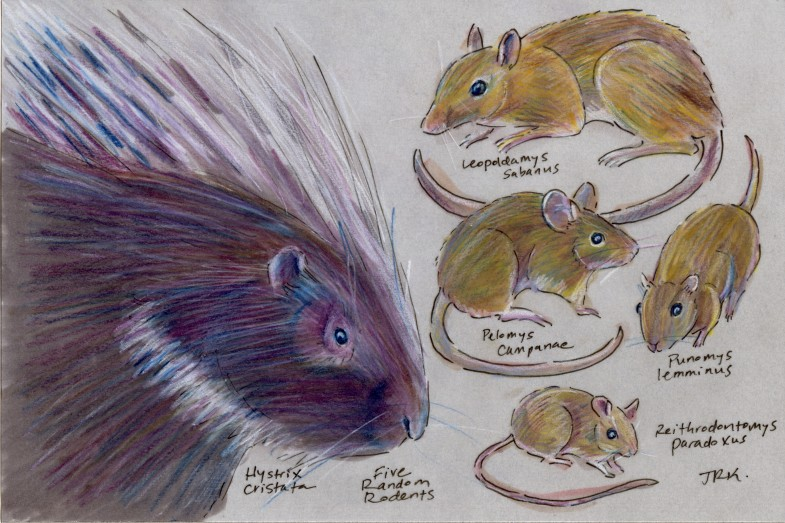 Five random rodents