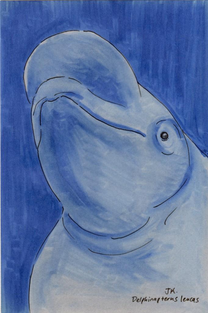 Delphinapterus leucas