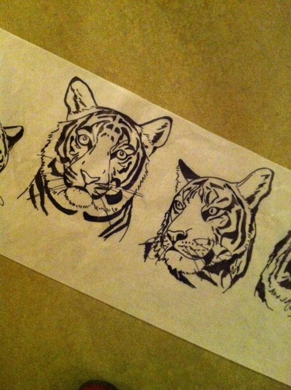 Drawing of tigers on roll of tracing paper