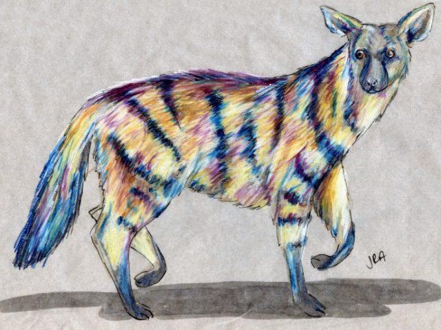 Striped Mammal Week: Aardwolf (Proteles cristata)