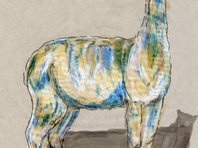 24 Hours: Alpaca (Lama pacos)