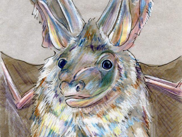 Newly Described Mammals Week: Alpine Long-Eared Bat (Plecotus alpinus)