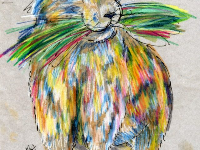 Mammals of New Mexico Week: American Pika (Ochotona princeps)