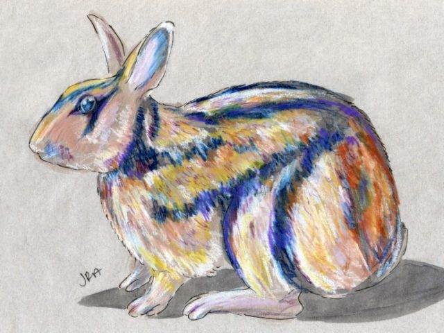 Newly Described Mammals Week: Annamite Striped Rabbit (Nesolagus timminsi)