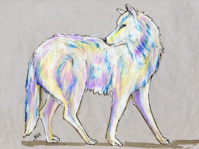 Back Orders: Arctic Wolf (Canis lupus arctos)