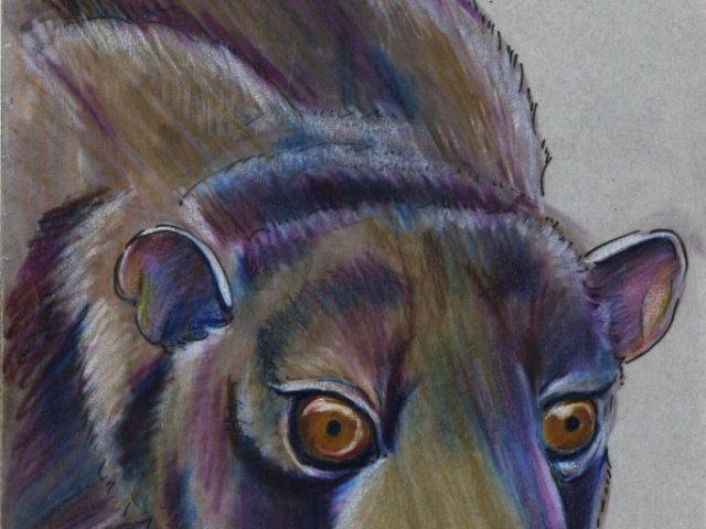 Bushy-tailed Olingo (Bassaricyon gabbii)
