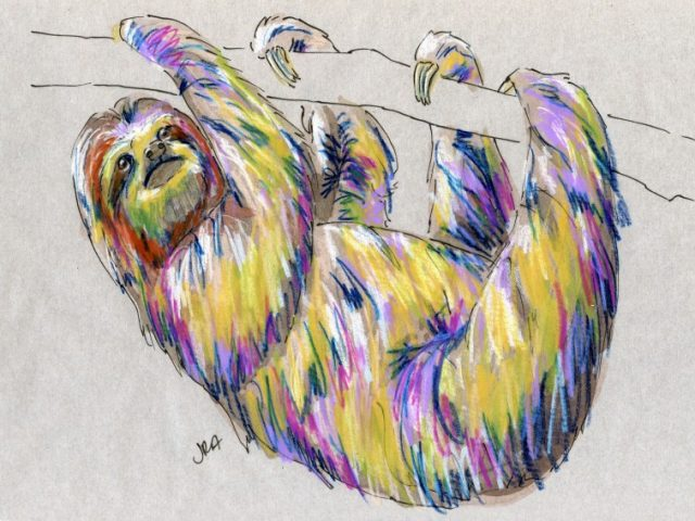 Back Orders: Brown-throated Three-toed Sloth (Bradypus variegatus)