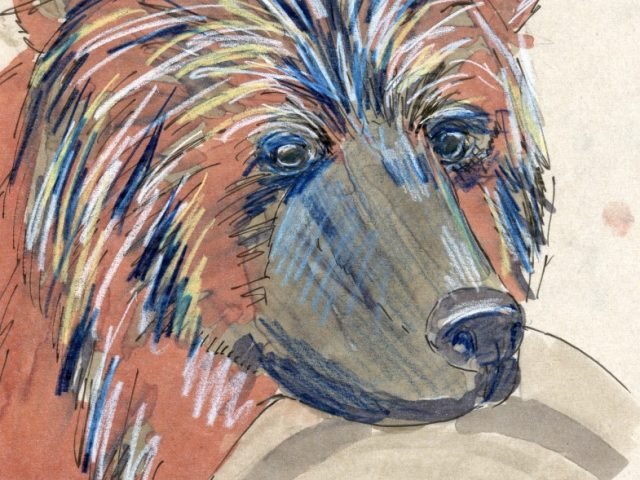 24 Hours: Brown Bear (Ursus arctos)