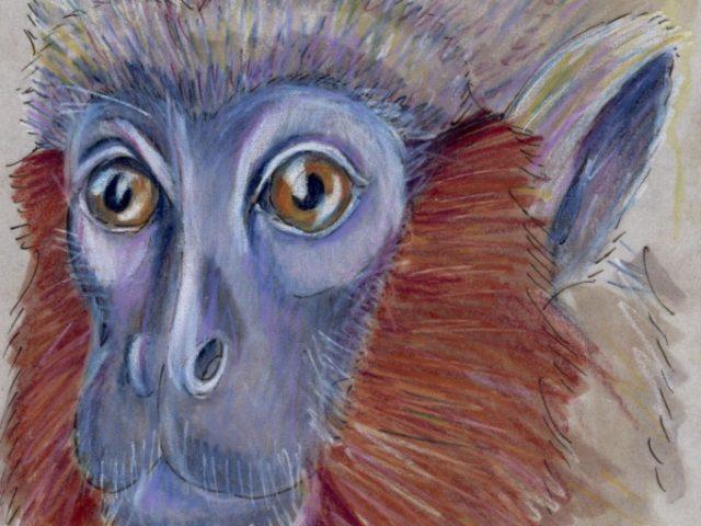 Facebook Friends: Colombia: Caquetá Titi Monkey (Callicebus caquetensis)