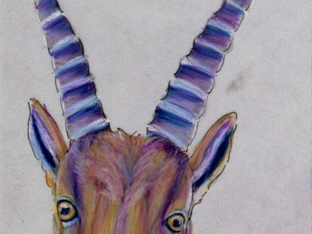World Cup: Italy's Alpine Ibex (Capra ibex)