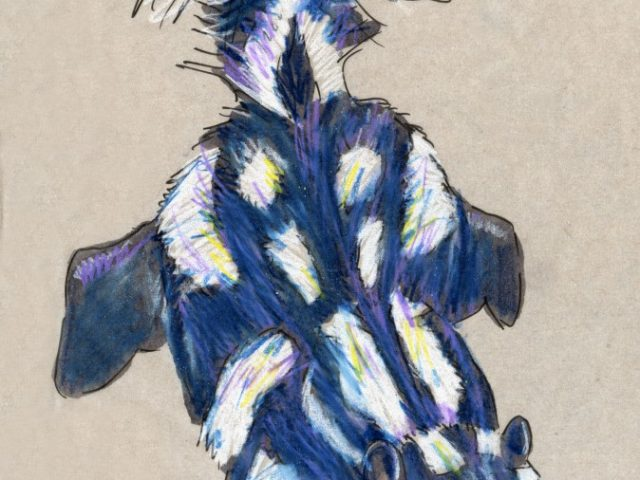 24 Hours: Eastern Spotted Skunk (Spilogale putorius)