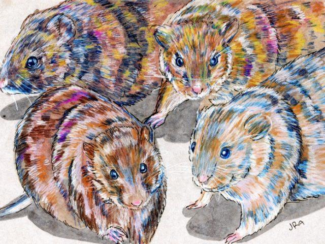 Various Voles (Macrotus spp.)