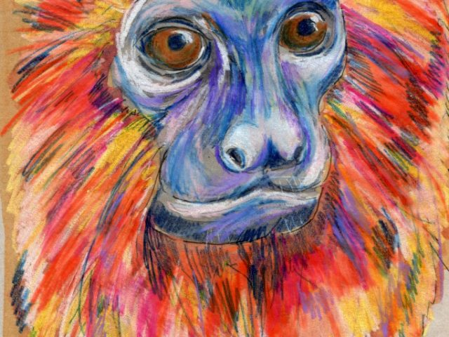 Back Orders: Golden Lion Tamarin (Leontopithecus rosalia)