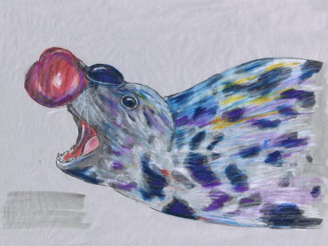 Hooded Seal (Crystophora cristata)