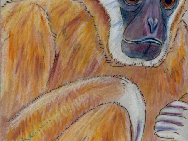 White-Handed Gibbon (Hylobates lar)