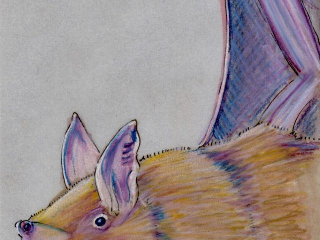 World Cup: New Zealand Lesser Short-Tailed Bat (Mystacina tuberculata)