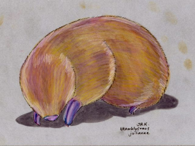 Juliana's Golden Mole (Neamblysomus julianae)