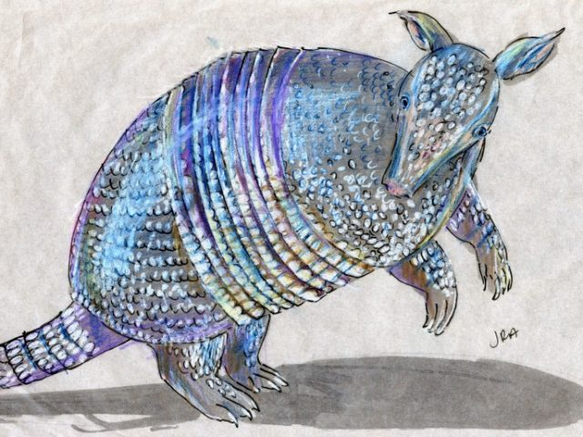 Striped Mammal Week: Nine-Banded Armadillo (Dasypus novemcinctus)
