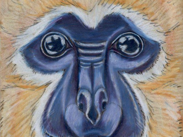 Mammal Olympiad: Gymnastics: Buff-cheeked Gibbon (Nomascus gabriellae)