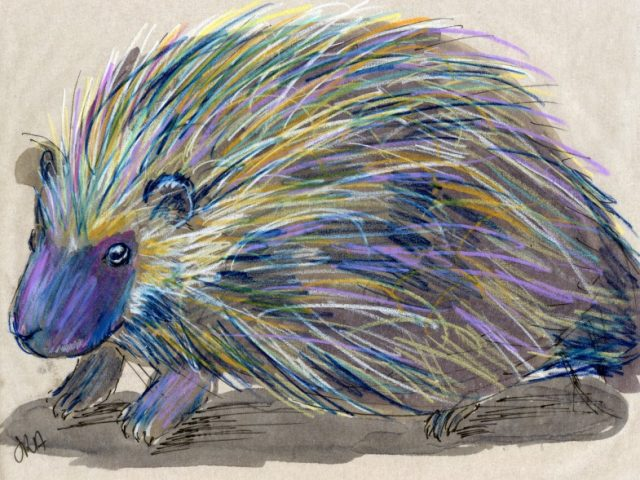24 Hours: North American Porcupine (and who's left?)
