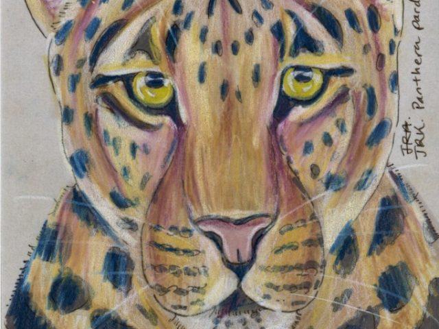Primorye Week: Leopard (Panthera pardus)