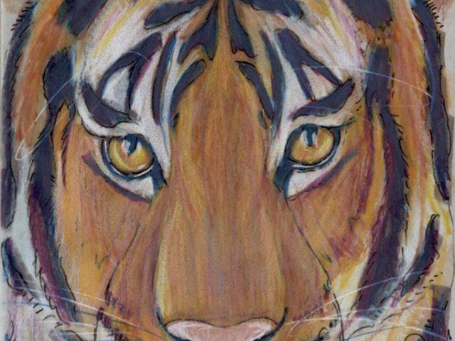 Primorye Week: Amur Tiger (Panthera tigris)