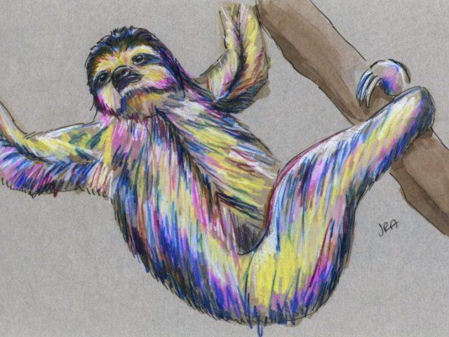 Newly Described Mammals Week: Pygmy Three-Toed Sloth (Bradypus pygmaeus)