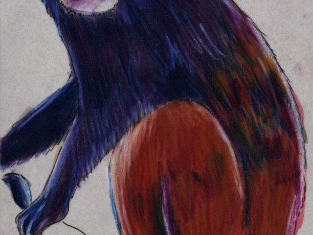 Mating Week: Saddleback Tamarin (Saguinus fuscicollis)