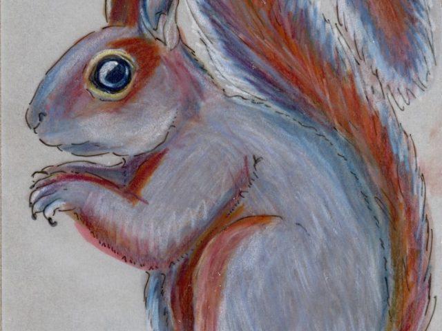 World Cup: Mexican Gray Squirrel (Sciurus aureogaster)