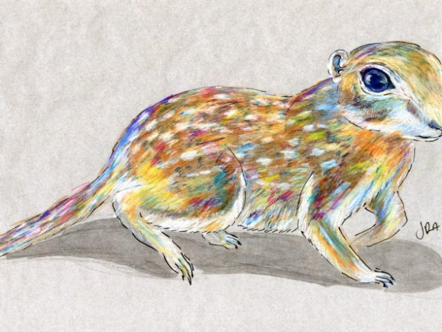 Mammals of New Mexico Week: Spotted Ground Squirrel (Spermophilus spilosoma)