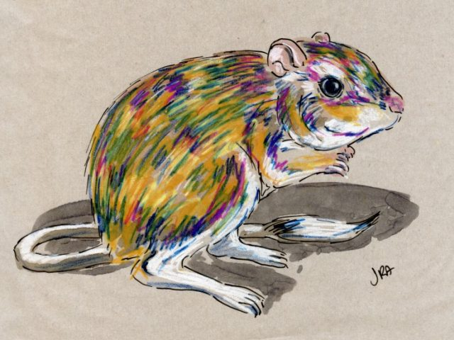 24 Hours: Texas Kangaroo Rat (Something somethingus)