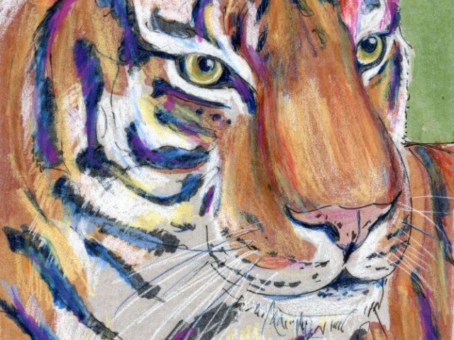 Mammalthon 2: Tiger (Panthera tigris)