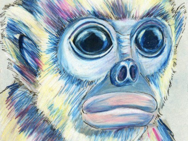 Tonkin Snub-nosed Monkey (Rhinopithecus avunculus)