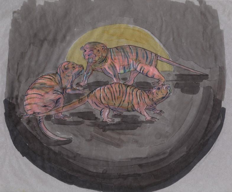 Heterocephalus glaber