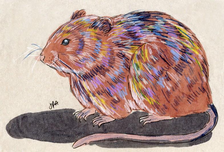 Microtus pennsylvanicus