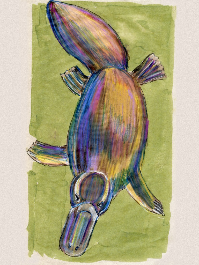 24 Hours: Platypus (Ornithorhynchus anatinus)