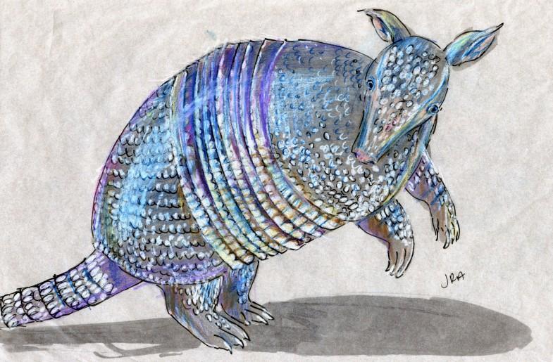 Striped Mammal Week: Nine-Banded Armadillo (Dasypus novemcinctus)