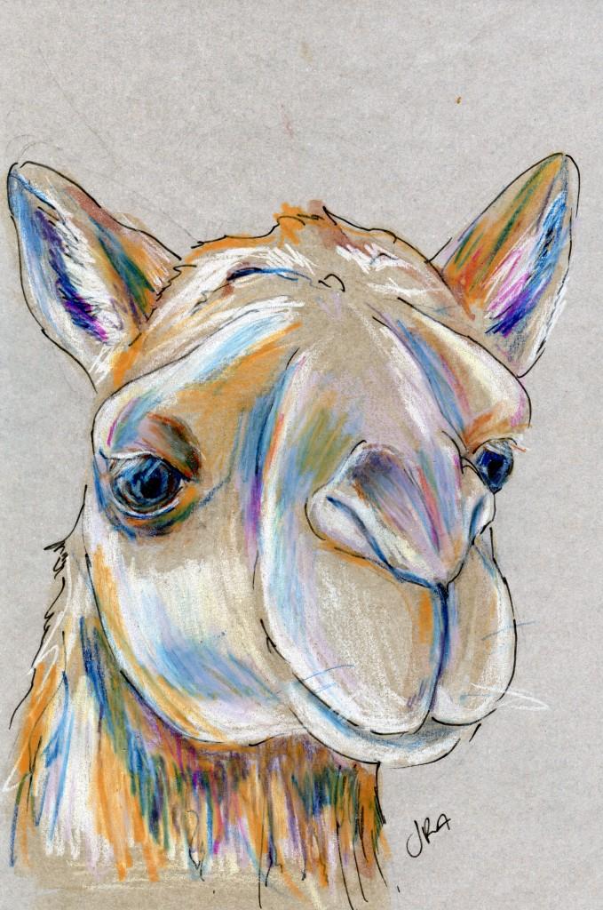 Mammalthon 2: Arabian Camel (Camelus dromedarius)